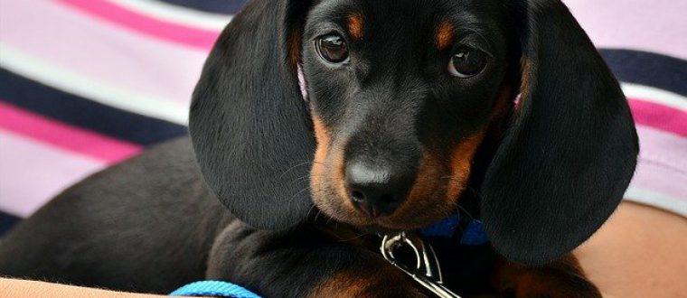 לבעלי כלבים: איך תוכלו לפנק את בעלי החיים האהובים שלכם?
