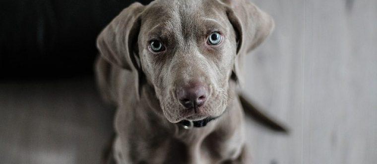 כל מה שרציתם לדעת על סירוס כלבים